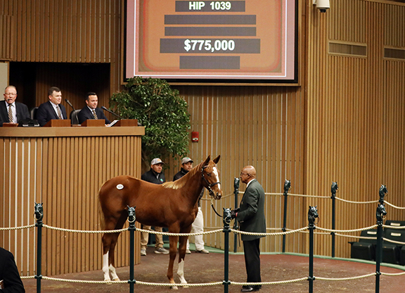 Best Pounces for Curlin Filly