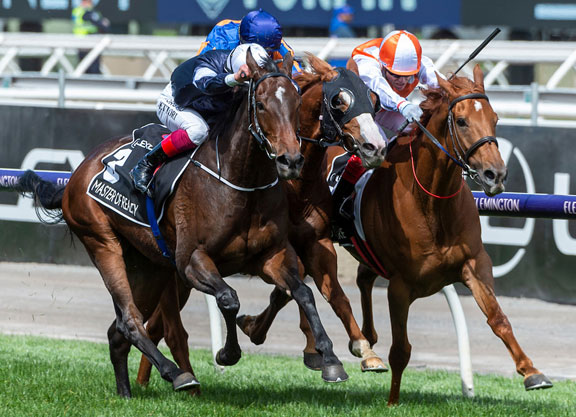 Pedigree Insights: Declaration of War's Vow And Declare