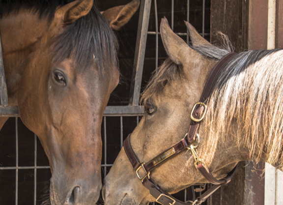 Horse Health: Mitigate Your Horse's Risk for Infectious Diseases