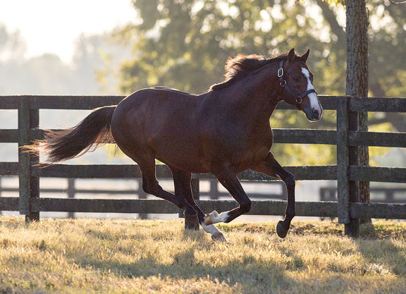 Into Mischief Firster Foils Heavy Fave at Santa Anita