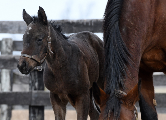 Funtastic Has First Foal