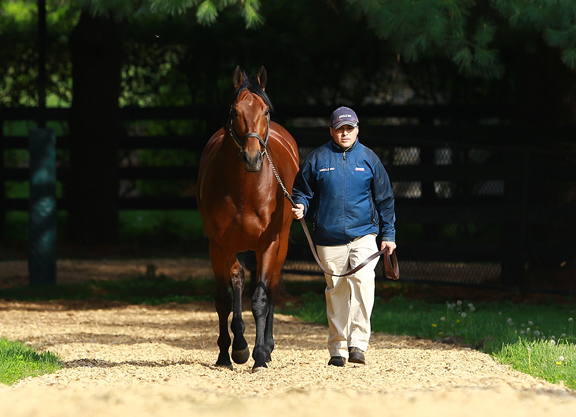 Kentucky Sires for 2021: Third-Crop Sires, Part I