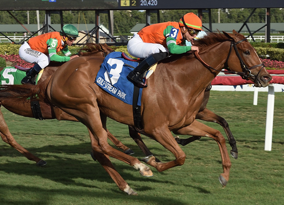 Scat Daddy Filly Makes the Grade at Gulfstream