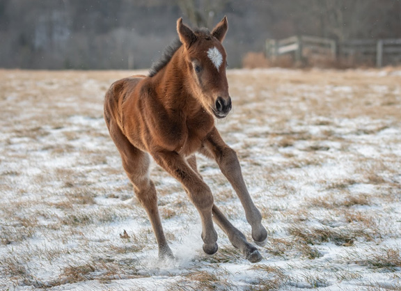First Foal for Hoppertunity