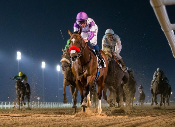Twirling Candy Colt To The Fore at Meydan