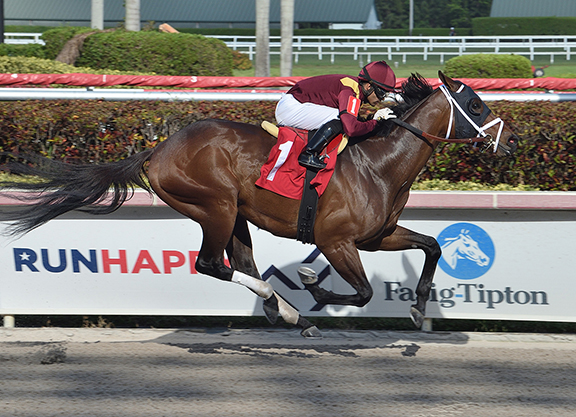 Pricey Candy Ride Colt Takes Salty Gulfstream Allowance