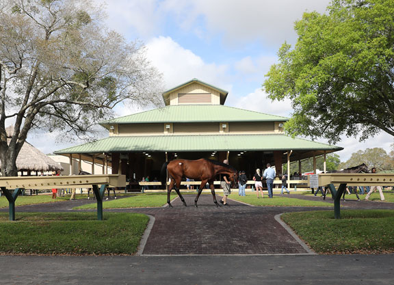 OBS Adds Supplemental Catalogue to Spring Sale