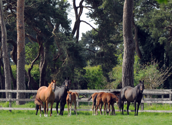 EU Commission Lifts 30-Day Foal Restrictions