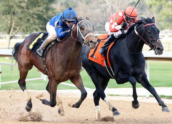 Shared Sense Seeks Second Derby