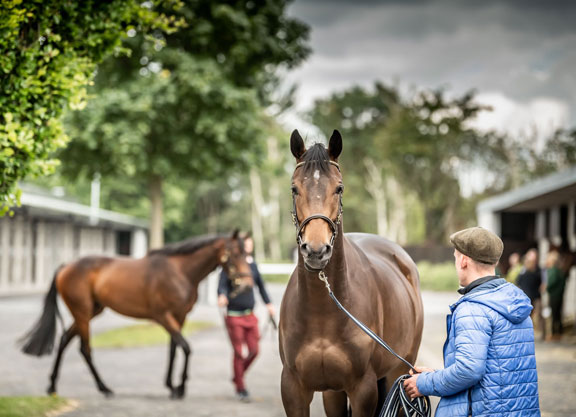 Upcoming Goffs, Tatts Ireland Sales To Stay In Ireland
