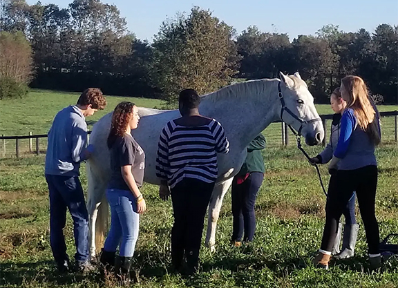 Fayette County Schools Launch Equine Training Program