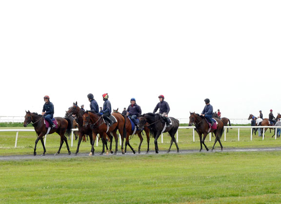 Interest in Horse Racing in Ireland Increasing