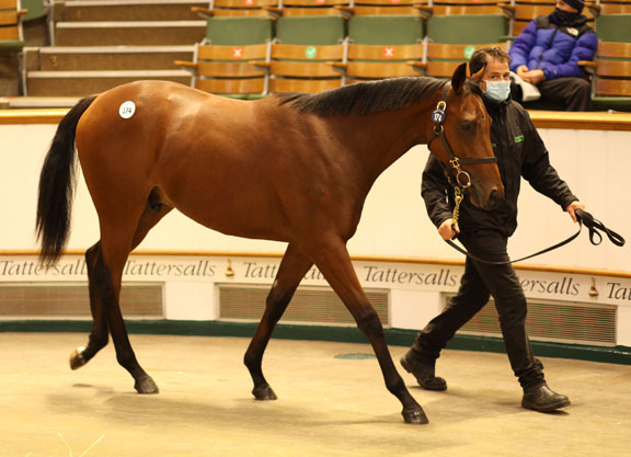Kingman Brother To Galileo Gold Leads Book 1 Opener