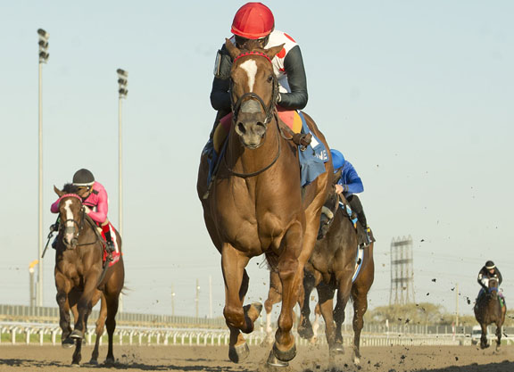 Curlin Rising Star With Another 'Glorious' Performance