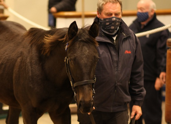Dubawi Stars At Foal Sale Friday