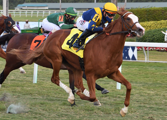 Constitution Colt Flies Home to Become a 'TDN Rising Star'