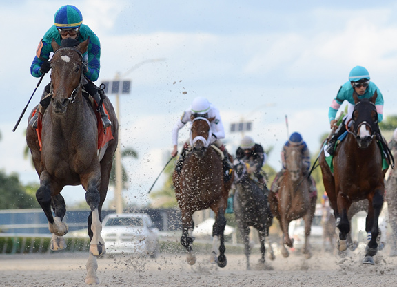 Homebreds Are Dominant On This Year's Derby Trail