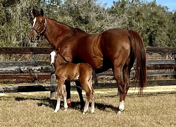 Preservationist Sires First Foal