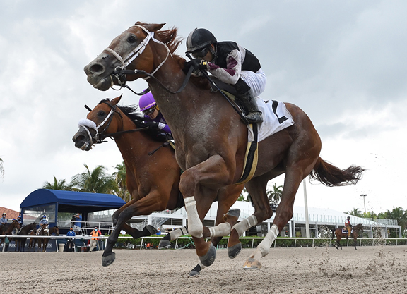 Fasig-Tipton H.O.R.A. Grad Could be on Way to Saudi Cup