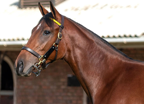 Silvano Yearling Headline Act on First Day of BSA National Sale