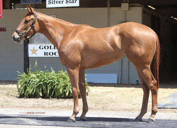 Classic Empire Filly Sets Quarter-Mile Mark at OBS