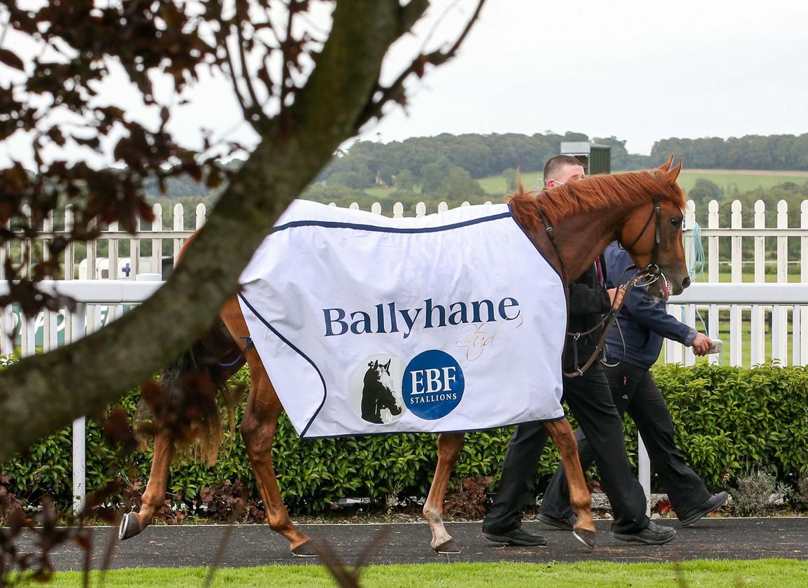 Second Irish EBF Ballyhane S. Field Revealed