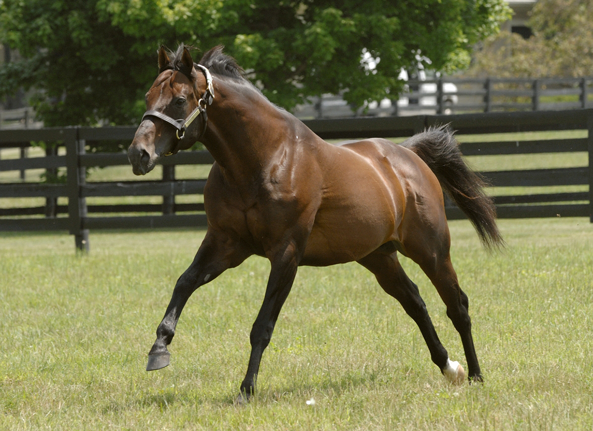 Taking Stock: Kentucky Stud Farms Invested in Candy Ride Sons