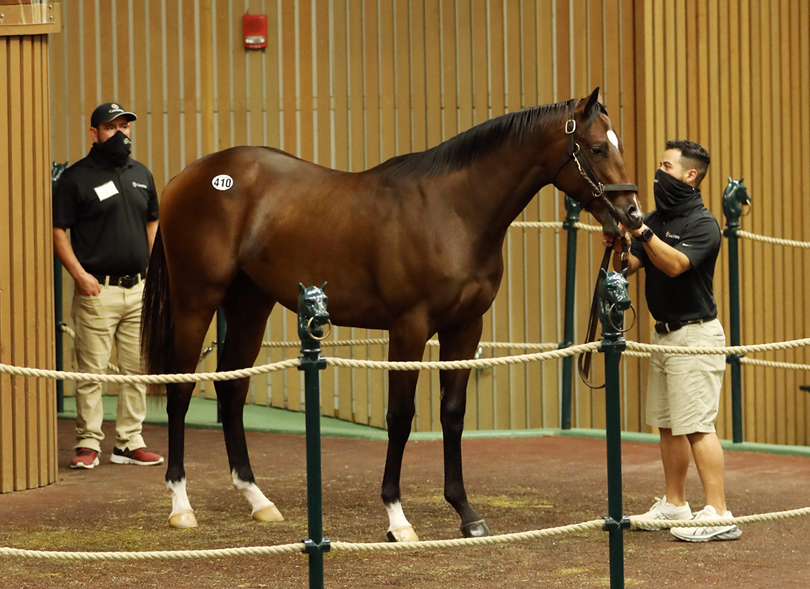 Immaculately Bred Tapit Colt Off the Mark in Japan