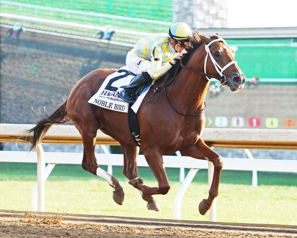 Noble Bird Off The Mark at Gulfstream