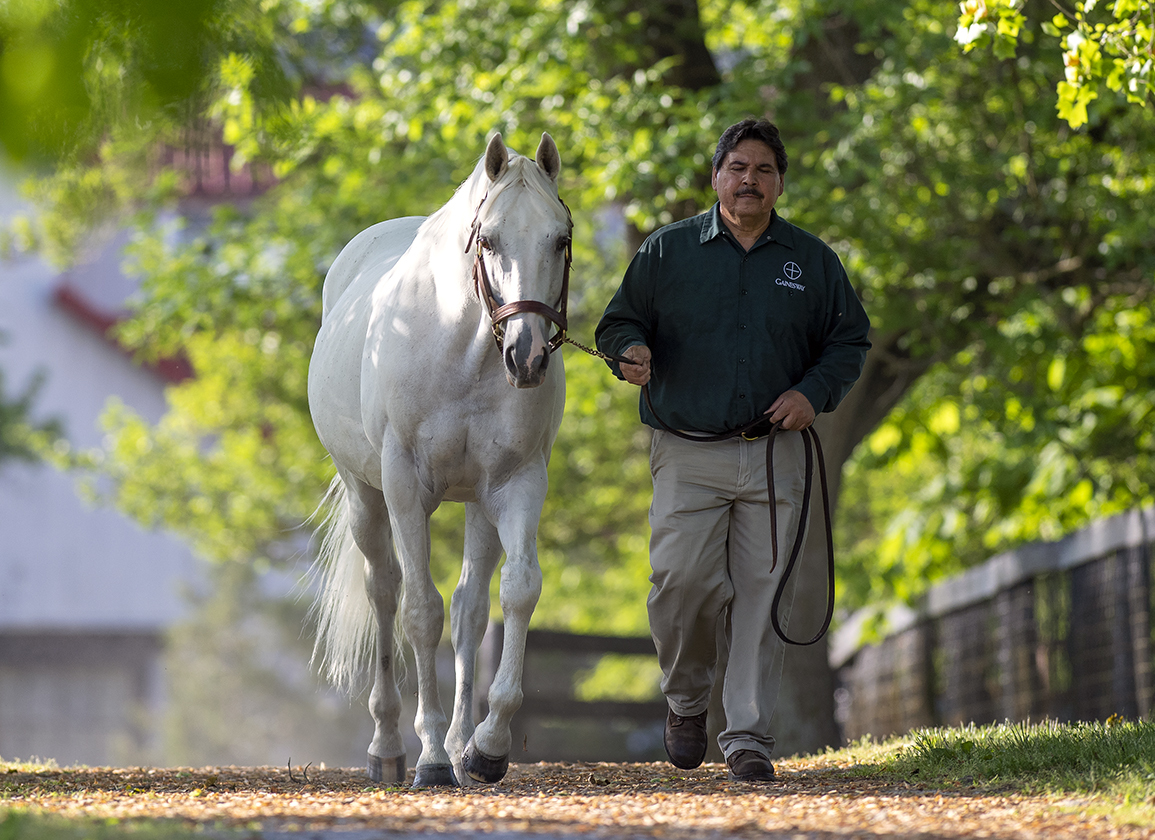 Another Belmont Brings Tapit to New Heights