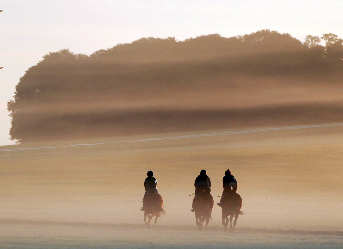 Equine Welfare Guidelines Published by TBA