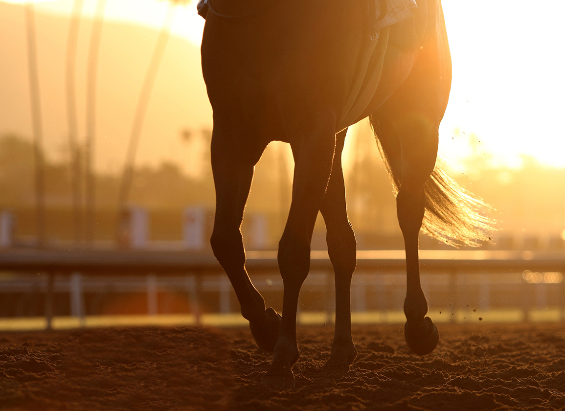 Penalize Trainers for Equine Fatalities? The Ins and Outs