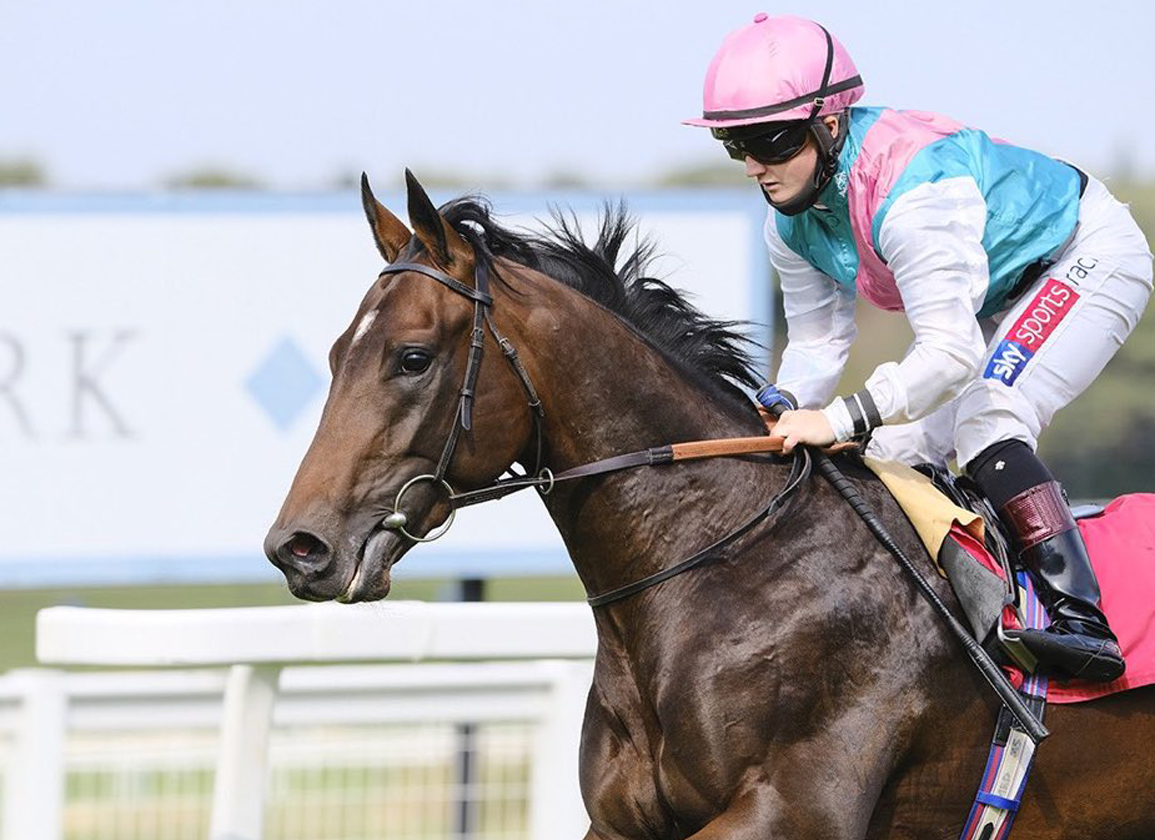 Juddmonte and Rosemont Partner on a Three-Quarter Brother to Frankel
