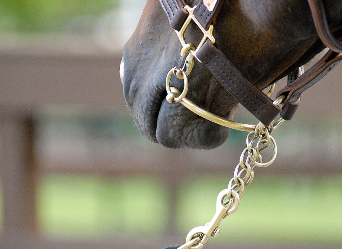 Increases at 2021 CTHS Alberta Yearling Sale
