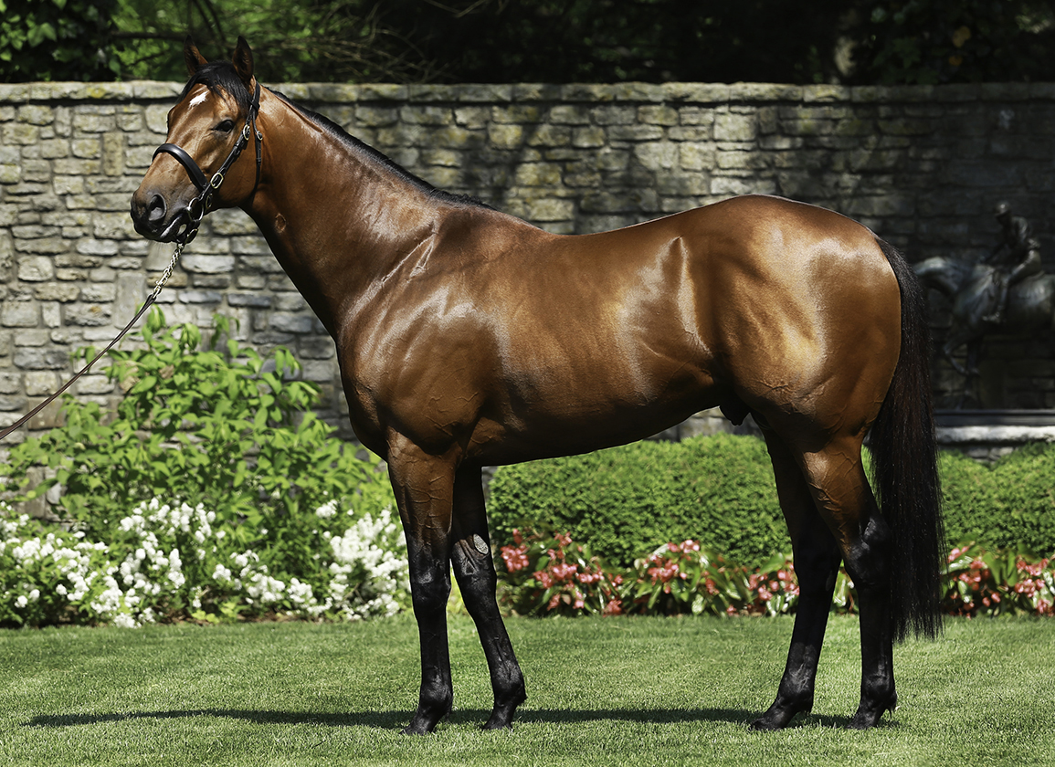 Notable US-Bred Runners in Japan: Sept. 25, 2021