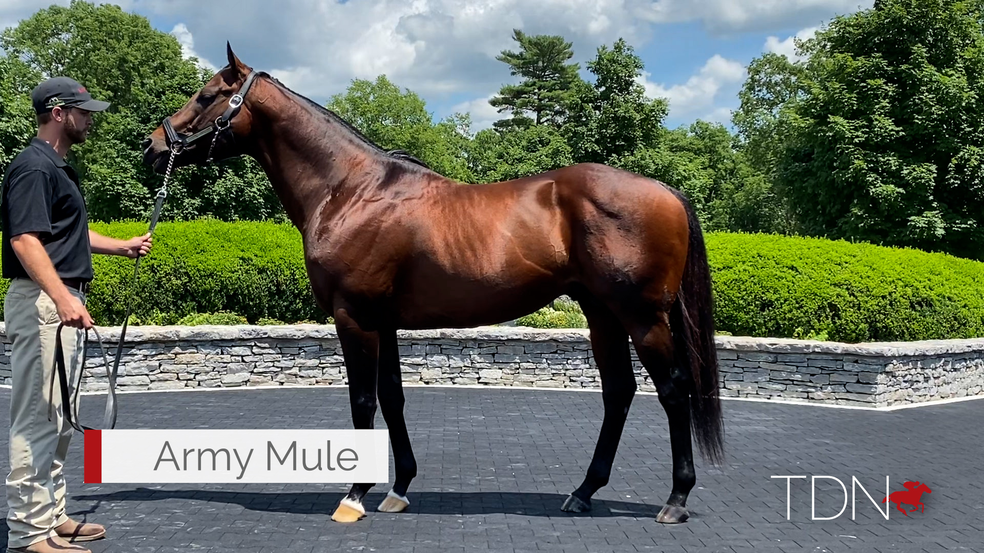 Fresh Off a Hot Saratoga, Army Mule Soldiers on to Keeneland