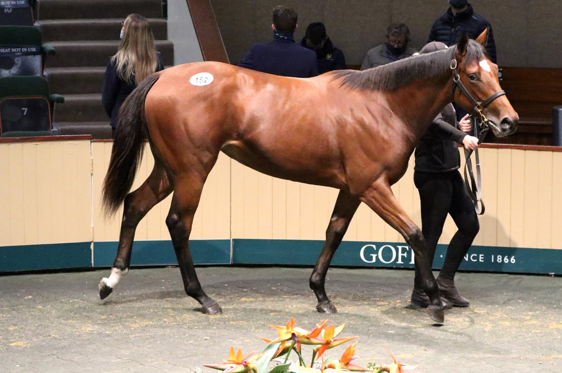 Galileo, Frankel Foals Highlight Goffs November Foal Sale