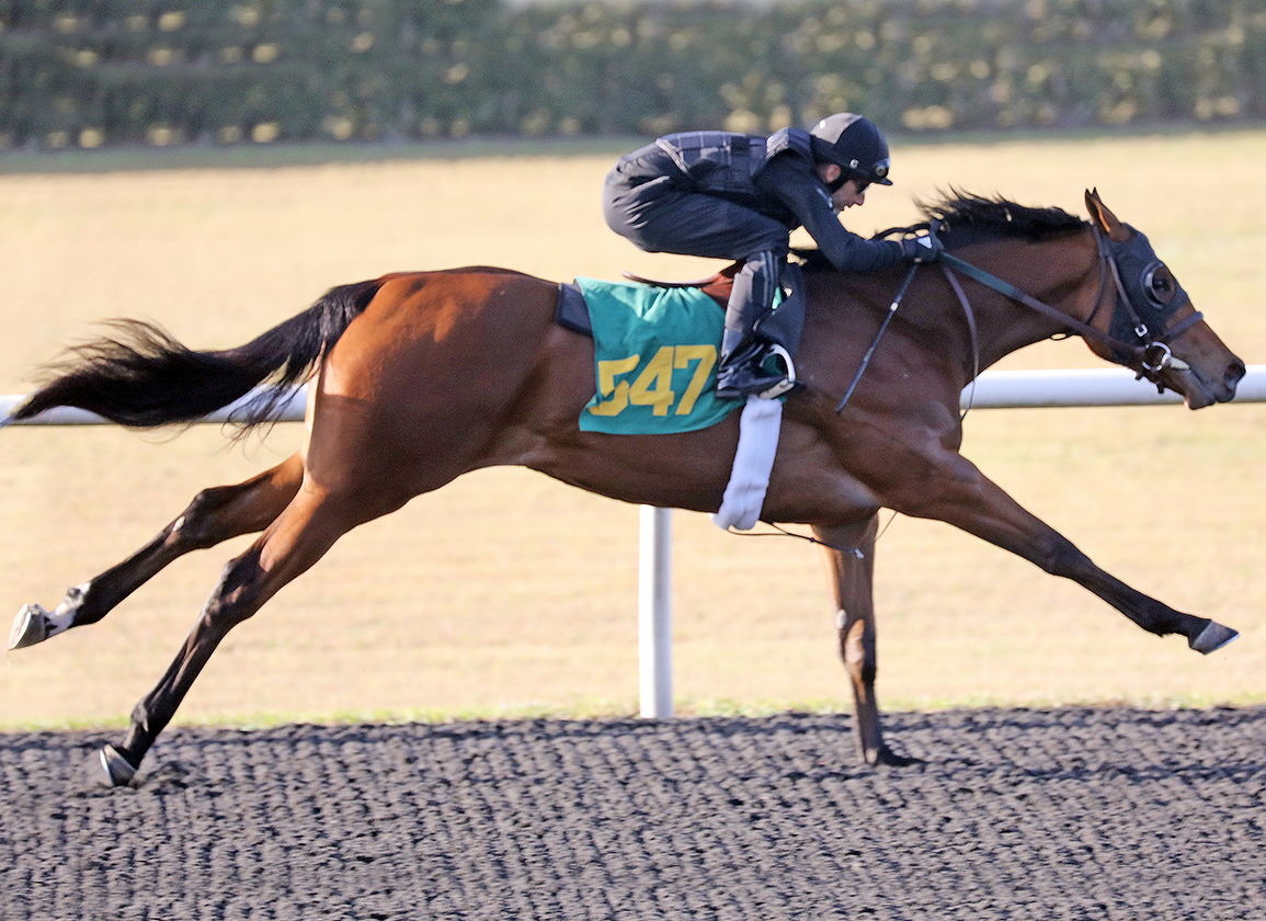 Notable US-Bred Runners in Japan: Oct. 16 & 17, 2021