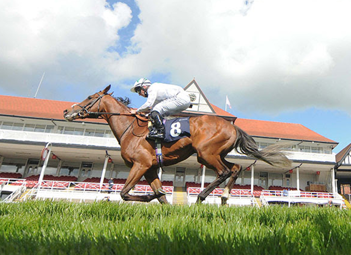 Youth Spirit One of 11 Wildcards Added to Tattersalls Autumn HIT Sale
